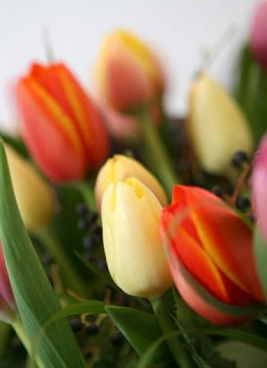tulips-landscape